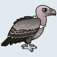 View more information about Rueppell's Vulture