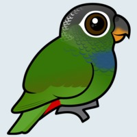 View more information about Scaly-headed Parrot