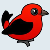 View more information about Scarlet Tanager