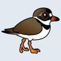 View more information about Semipalmated Plover