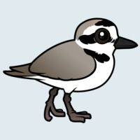 View more information about Snowy Plover