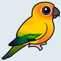 View more information about Sun Parakeet