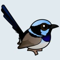 View more information about Superb Fairywren