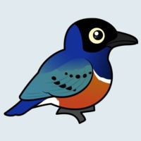 View more information about Superb Starling