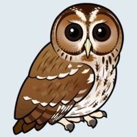 View more information about Tawny Owl