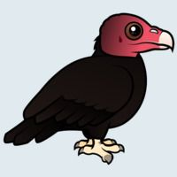 View more information about Turkey Vulture