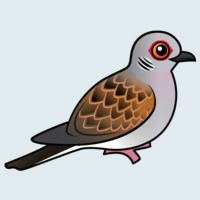 View more information about European Turtle Dove