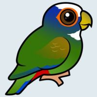 View more information about White-crowned Parrot