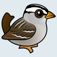 View more information about White-crowned Sparrow