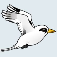 View more information about White-tailed Tropicbird