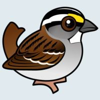 View more information about White-throated Sparrow