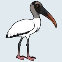View more information about Wood Stork
