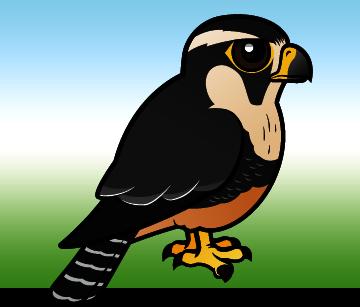 cute aplomado falcon by birdorable