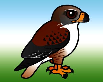 Cute Ferruginous Hawk By Birdorable