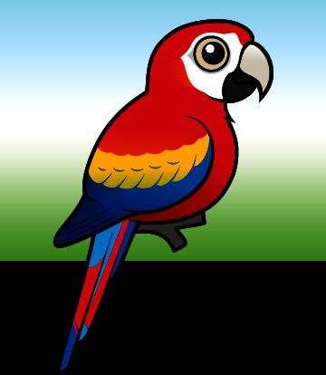 cute scarlet macaw by birdorable u003c meet the birds rh birdorable com macaw clipart black and white macaw bird clipart