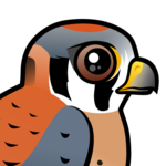 Birdorable American Kestrel