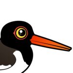 Birdorable American Oystercatcher