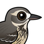 Birdorable American Pipit
