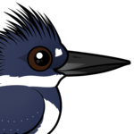Birdorable Belted Kingfisher