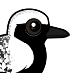 Birdorable Black-bellied Plover