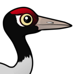 Birdorable Black-necked Crane