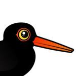 Birdorable Black Oystercatcher