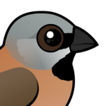 Birdorable Black-throated Finch