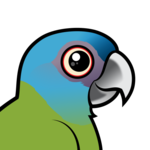 Birdorable Blue-headed Macaw