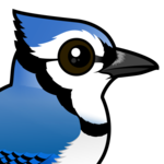 Birdorable Blue Jay