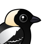 Birdorable Bobolink