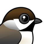 Birdorable Boreal Chickadee