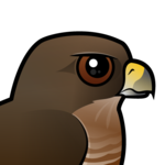 Birdorable Broad-winged Hawk