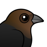 Birdorable Brown-headed Cowbird