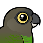 Birdorable Brown-headed Parrot