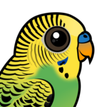 Birdorable Budgerigar