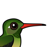 Birdorable Buff-bellied Hummingbird