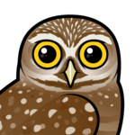 Birdorable Burrowing Owl