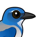 Birdorable California Scrub-Jay