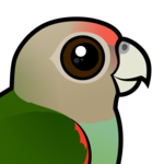 Birdorable Cape Parrot