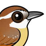 Birdorable Carolina Wren