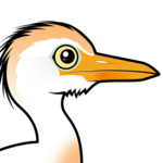 Birdorable Cattle Egret