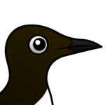 Birdorable Common Murre
