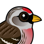 Birdorable Common Redpoll