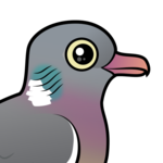 Birdorable Common Wood Pigeon