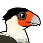 Birdorable Crested Caracara