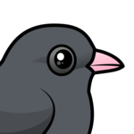 Birdorable Dark-eyed Junco