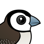 Birdorable Double-barred Finch