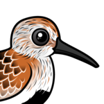 Birdorable Dunlin