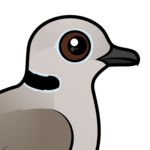 Birdorable Eurasian Collared Dove