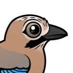 Birdorable Eurasian Jay